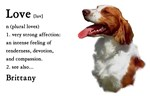 American Brittany Spaniel Love Is...