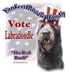 Yankee Labradoodle Dandy