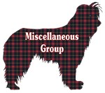 AKC Miscellaneous Group