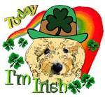 Today I'm Irish Goldendoodle