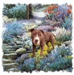 American Staffordshire Terrier Art