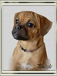 Puggle Gifts of Art