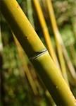 Kizuna-en Bamboo Garden