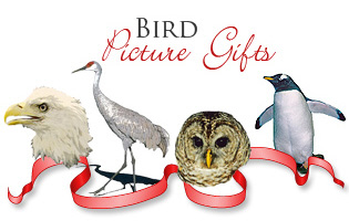 <b> BIRD PICTURE GIFTS</b>