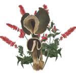 Deep Brown Mushrooms Red Flowers