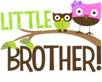 Little Brother Owl