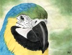 Blue & Gold Macaw Watercolor
