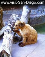 San Diego Zoo Cub