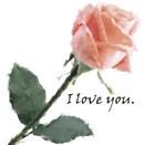 Valentine, Wedding & Wedding Proposals
