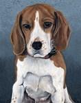 Sally, the Beagle