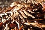 Sunny Redwood Needles