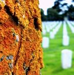 Orange in a Cemetery
