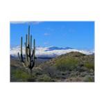 Snowy Desert with Saguaro Cactus