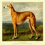 Greyhound 1880 Digitally Remastered