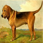 Bloodhound 1880 Digitally Remastered