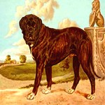 Mastiff Cassell 1881 Digitally Remastered