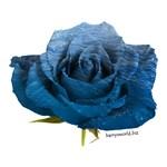 Ocean Rose