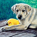 My Ducky, Yellow Lab Puppy
