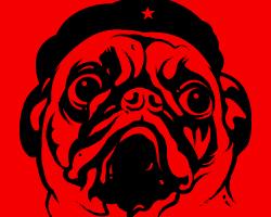 Pug Revolution