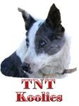 TNT Koolies