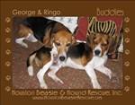 Beagle Rescue Calendars