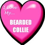 I Love My Bearded Collie