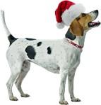 Santa Foxhound