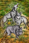 Prairie Wolves