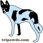 Tripawds.com (Maggie)