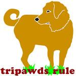 three legged golden retriever tripawds rule t-shirt design