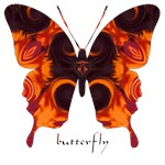 Herald Orange/Black Butterfly
