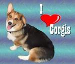 I Love Corgis