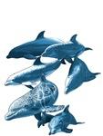 Dolphins adventure