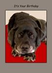 Labrador & Dog Birthday Card Sets