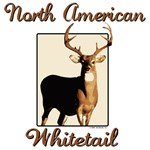 American Whitetail