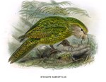 Illustration of Green Parrot