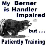 Bernese Mountain Dog Agility