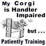 Pembroke Welsh Corgi Agility