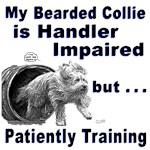 Bearded Collie Agility