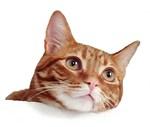 Cat Longing