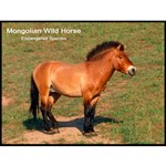 Mongolian Wild Horse Photo