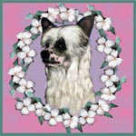 Chinese Crested Designs