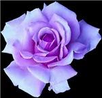 Bloomin Intimate Wear