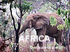 Africa / South Africa
