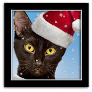 Santa Black Cat