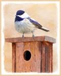 Chickadee on Birdhouse