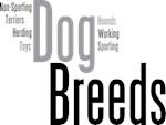 Dog Breeds in Words