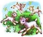 Cute Sheep Baby Lambs