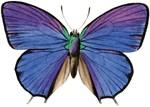 Butterflies, Symbols of Transformation