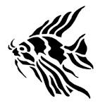 Black Tiger Fish